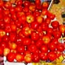 すっぱい果物アセロラも人気